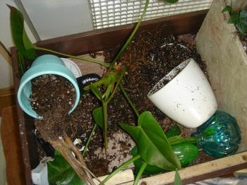 植物が~ん.jpg